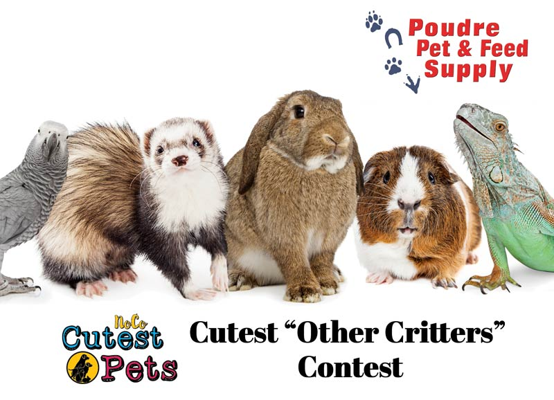 Cutest Other Critters Contest