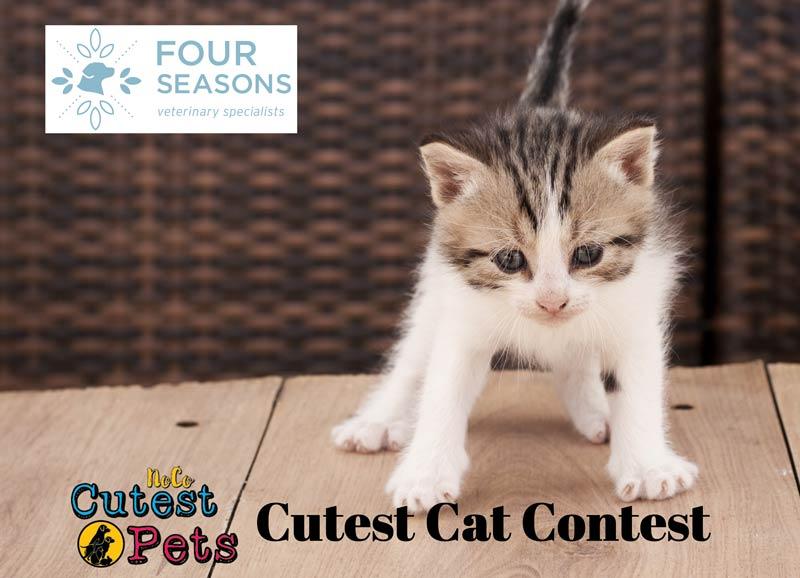 Pet Contest Cutest Cat