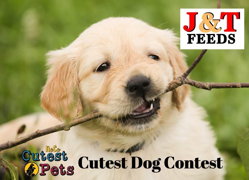 Cutest Dog Contest